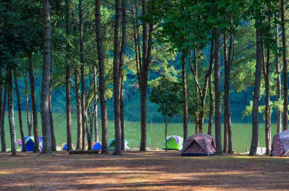 Camping location amongst wind barrier trees to keep tent warm