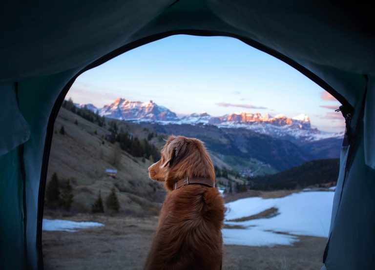 Cold camping with dog in a beautiful snow capped setting