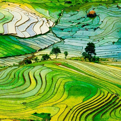 Rice-stairs-of-the-Philippines