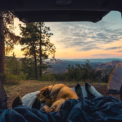The-wakeup-call-from-a-camper