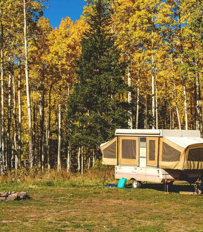 Pop up camper featured image amongst tall thing trees