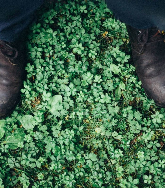 Standing over a patch of wild green clover looking down